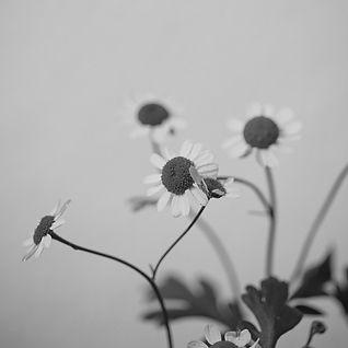 flower_04_edited.jpg