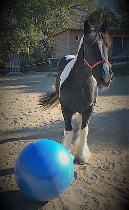 Bliss ballon.PNG