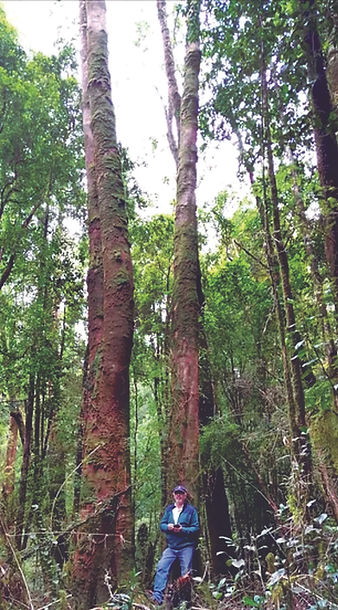 Parque Natri Bosques 3.jpg