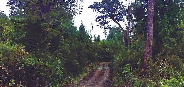 Parque Natri Bosques 4.jpg