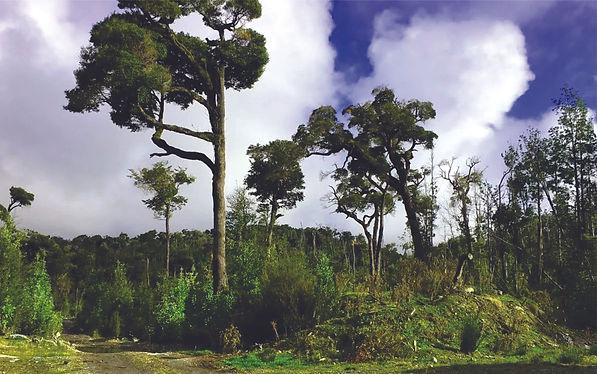Parque Natri Bosques 1.jpg