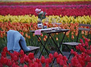 picnic tulipmania