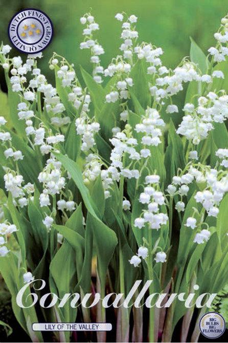 Lirio de los valles/Convallaria Majalis (10 semillas)