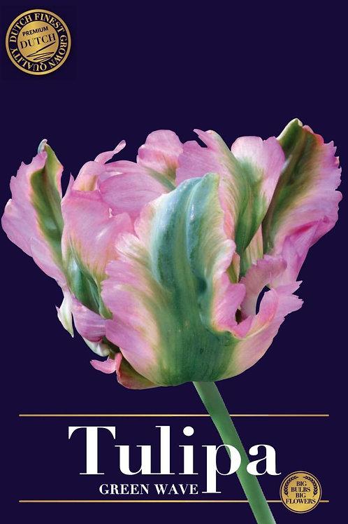 Tulipa Green wave (5 bulbos)