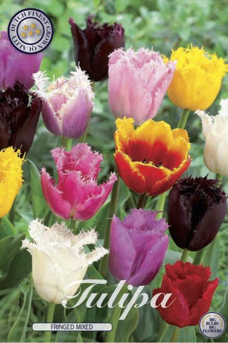 Tulipanes Crispa Mix (10 bulbos)