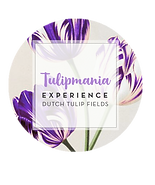 logo_tulipmania_purple.png