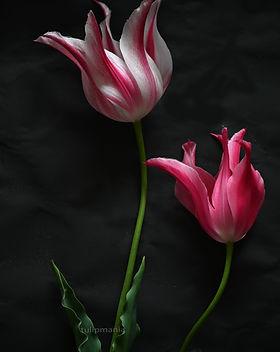 lilies_2.jpg