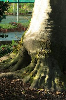 Jardin des plantes, Rouen, France