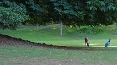 Parc de Clères, France
