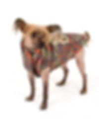 camufashion windjacket i love my dog