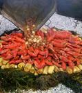 lobsters.rosemarie McLaughlinJPG.jpg