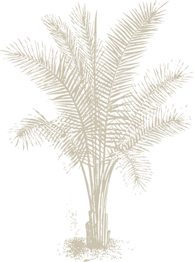 Vector Smart Object 3.png