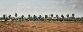 campos_palms.jpg