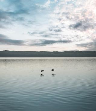 Starnberger See Vögel, 2021