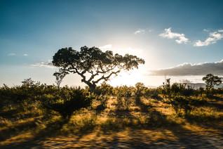 sunset_kruger_nationalpark.jpg