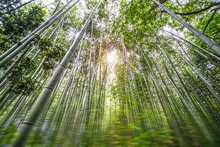 bamboo_garden.jpg