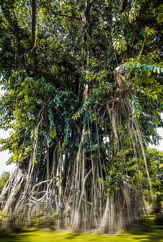 tree_hochiminh_1.jpg
