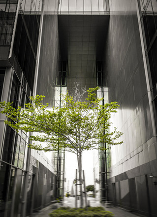 dubai_design_district_tree.jpg