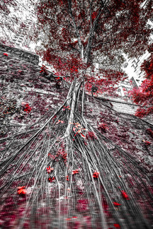 hongkong_red_tree.jpg