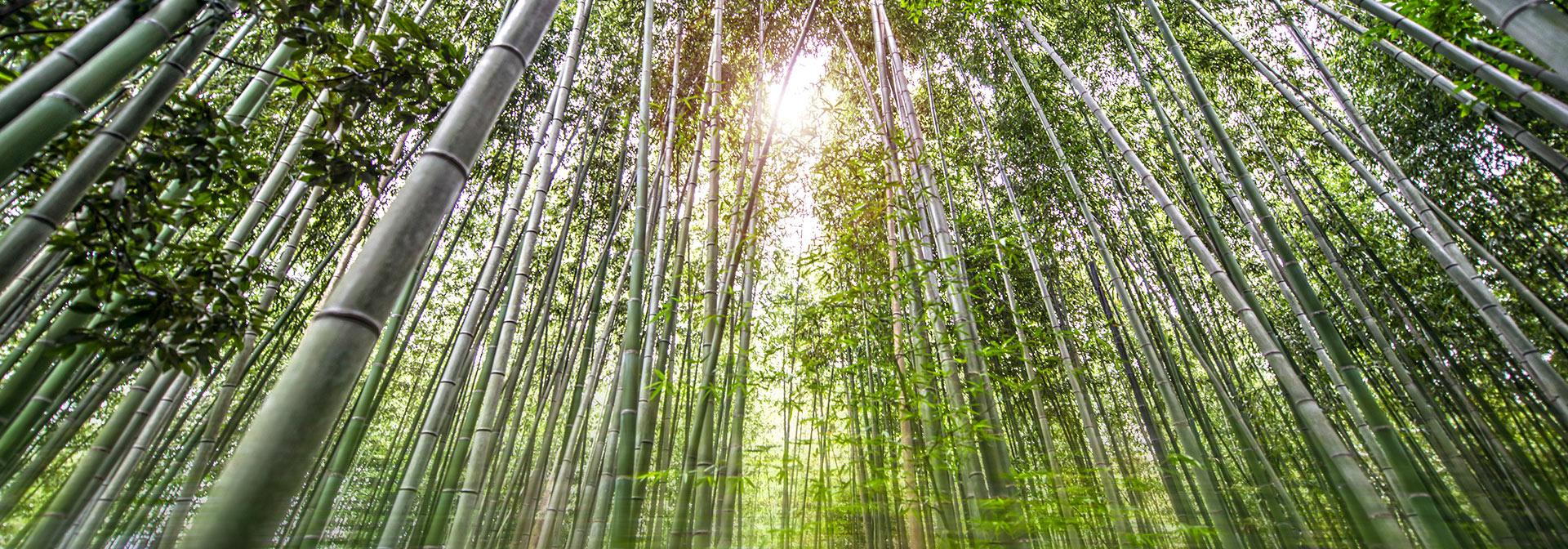 Bamboo Garden Kyoto