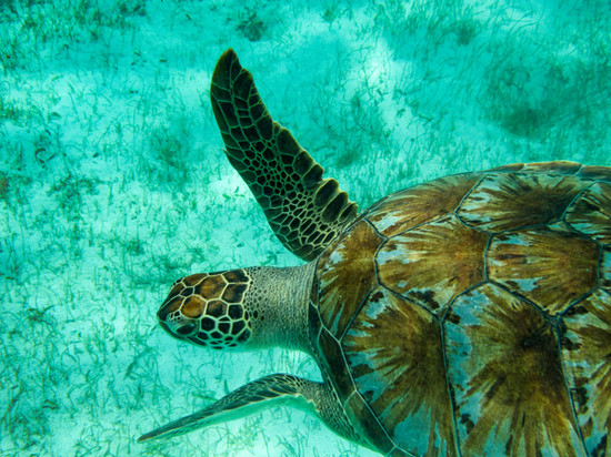 Green Turtle  copy.jpg