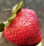 website strawberry_edited.png