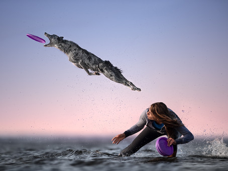 Dog Photography: learning how I create a photo Dogs in Action