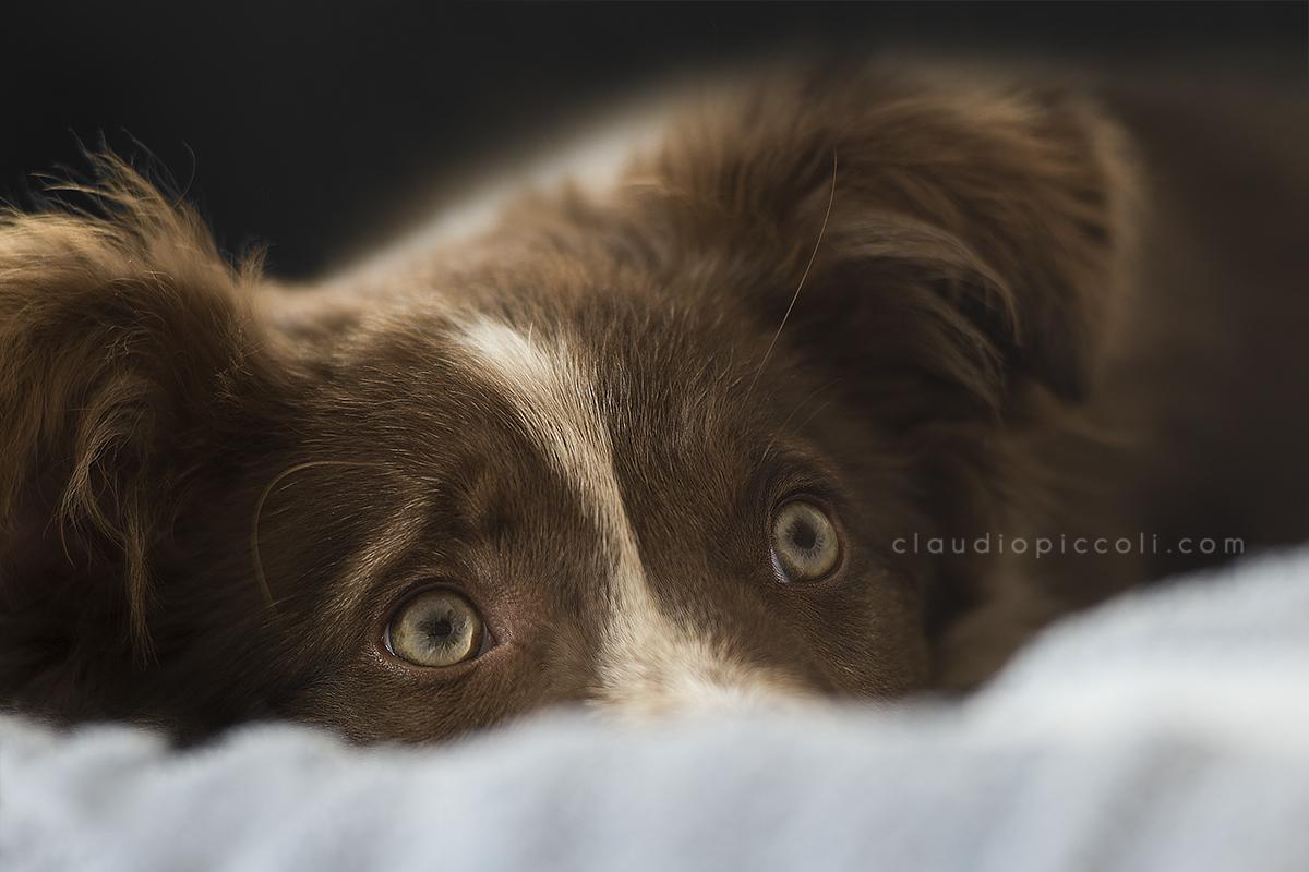 Puppy Look