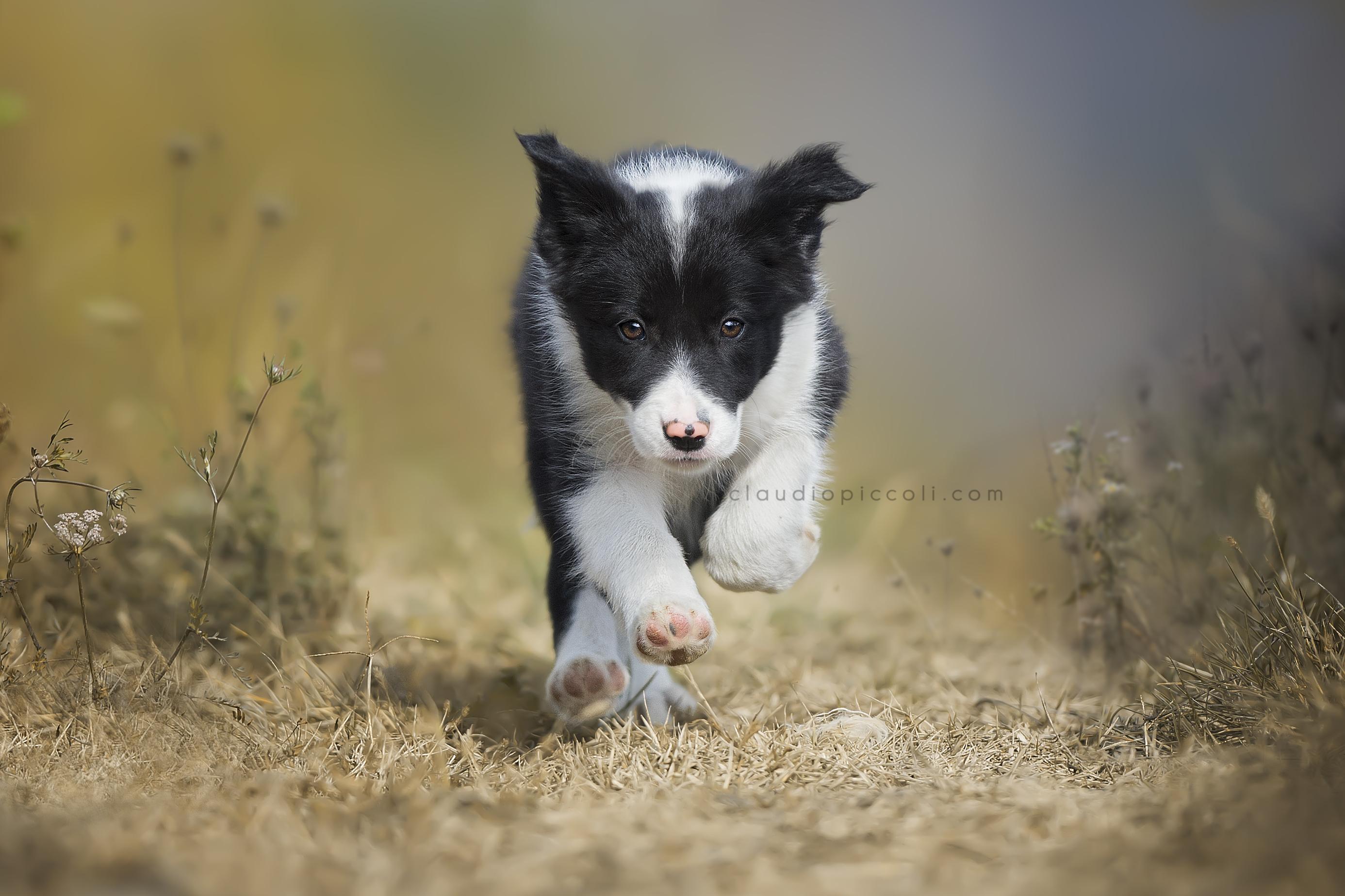 I'm a Puppy :)