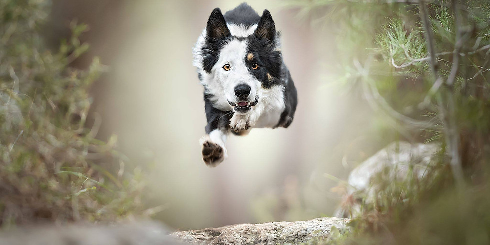 """Photography Workshop """"Dogs in Action"""" 3.0 AUSTRIA 9/10 November 2019 by CLAUDIO PICCOLI Hosted and helped by ANNE GEIER"""