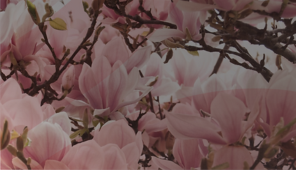 Banner_1566x902px_RGB-01-01.png