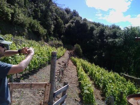 cinque terre vigne .JPG