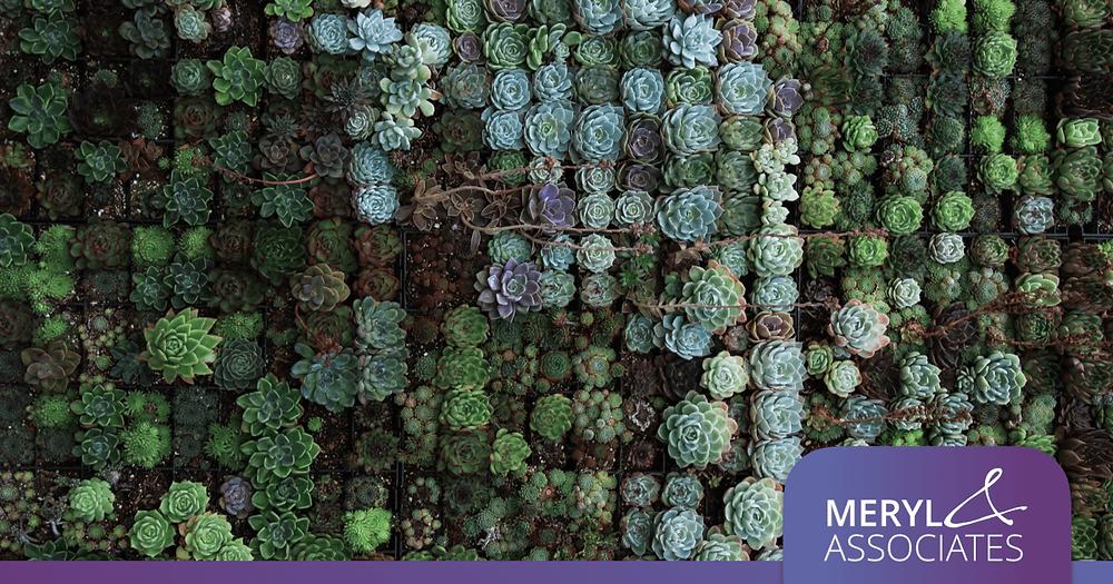 Mur végétal de plantes succulentes