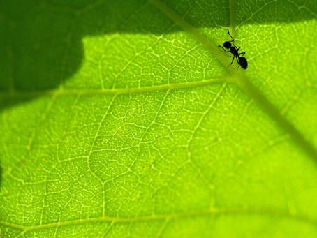 Ant Wisdom