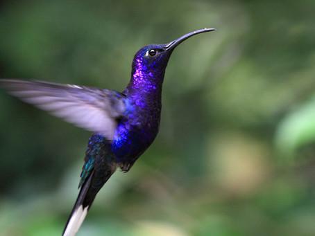 Birdie, Birdie in the Air