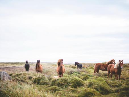 Fed Horses