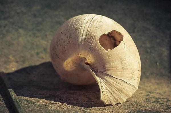 shell-broken-empty-close-up-abandoned-na
