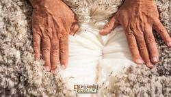 Calidad en lanas