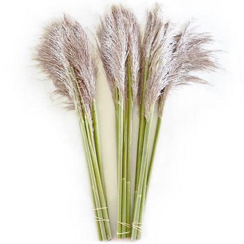 Pampas Grass-5 Stem Bundle