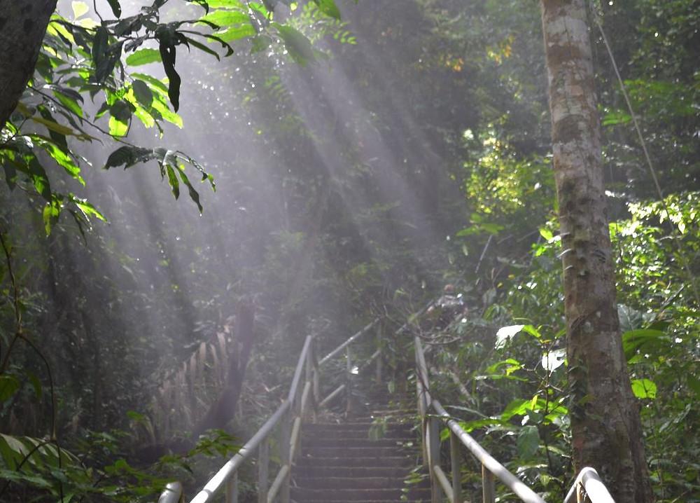 En medio de la subida solo se podía escuchar el ruido de la jungla