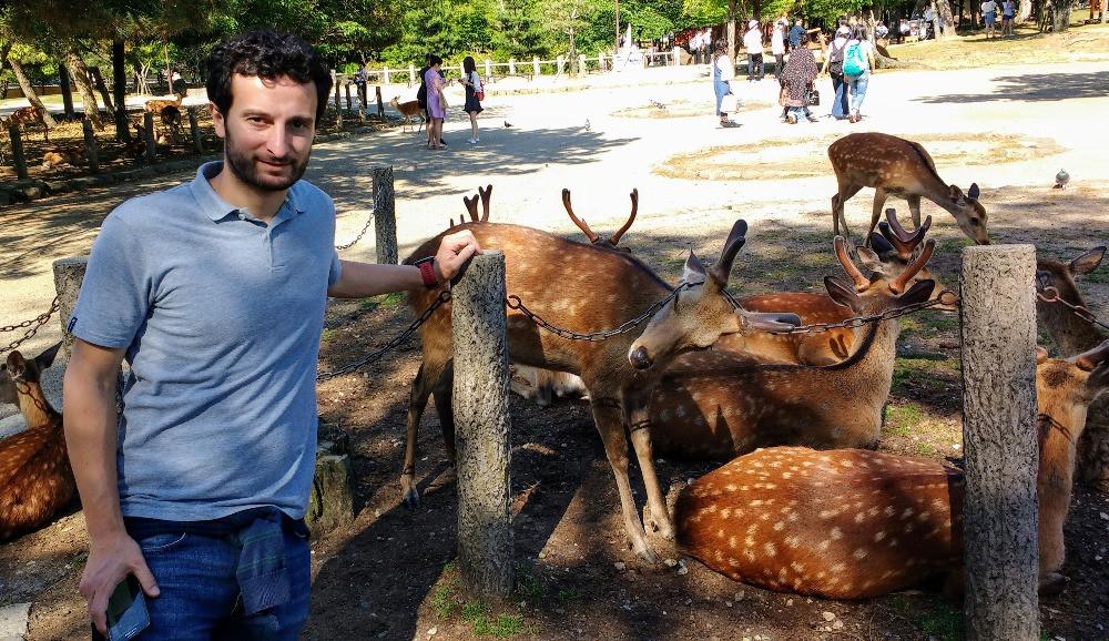 Los ciervos de Nara conviven con el resto de elementos de la ciudad