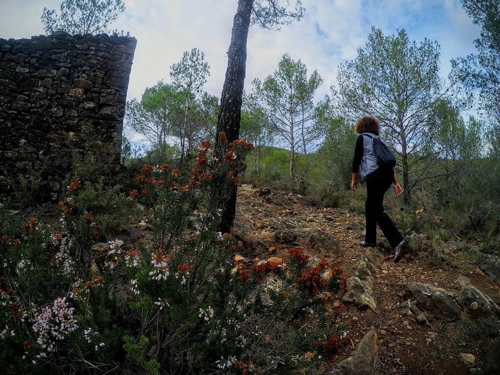 Ruta por los alrededores de Suera, Castellón