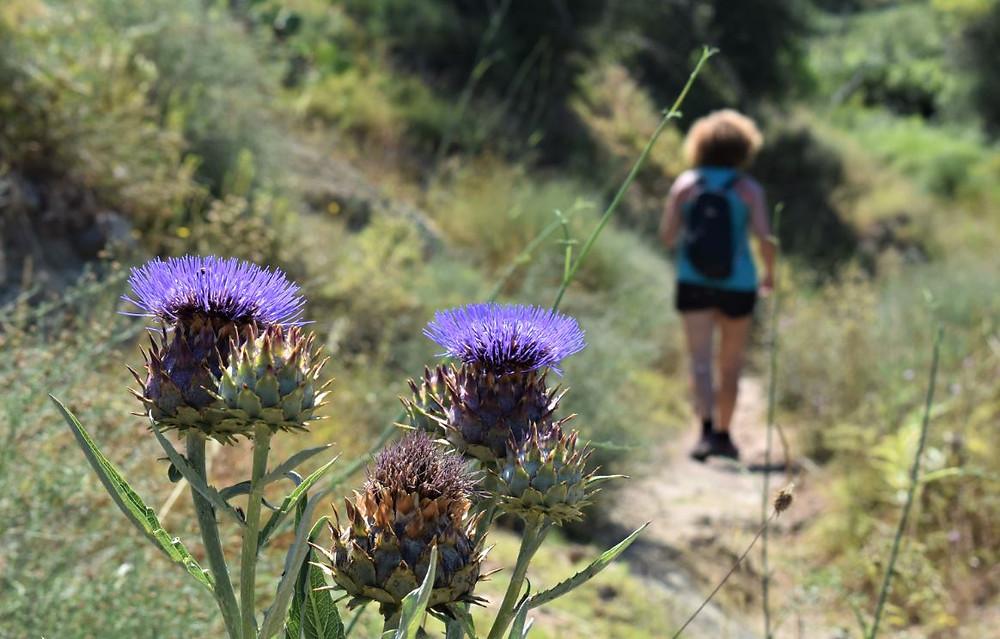 De nuevo caminando por la naturaleza encontramos los espacios más bellos de La Canal de Navarrés