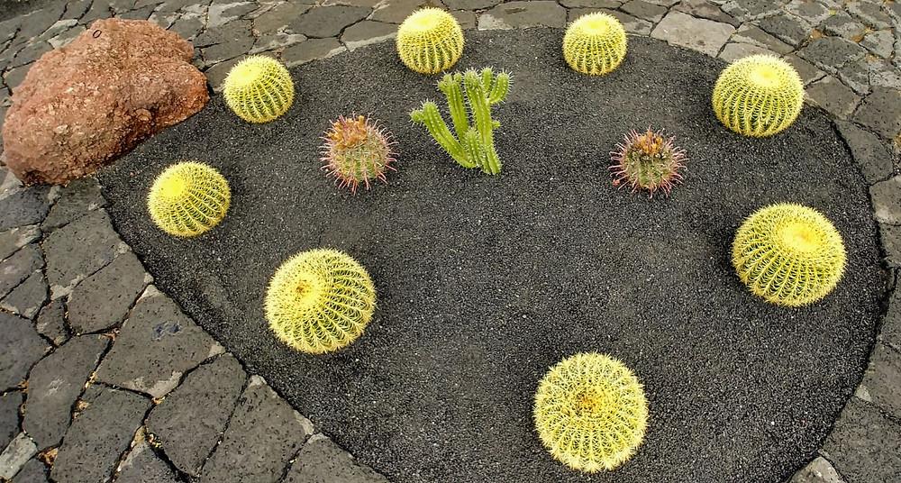 El Jardín del Cactus está repleto de plantas autóctonas