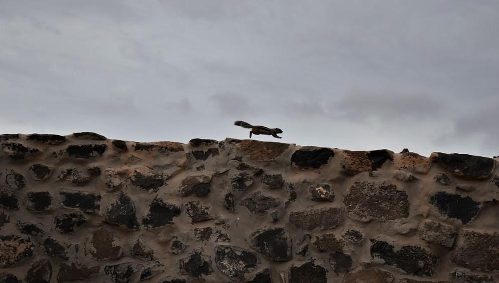 Cientos de ardillas jugueteaban por los alrededores de las Salinas del Carmen