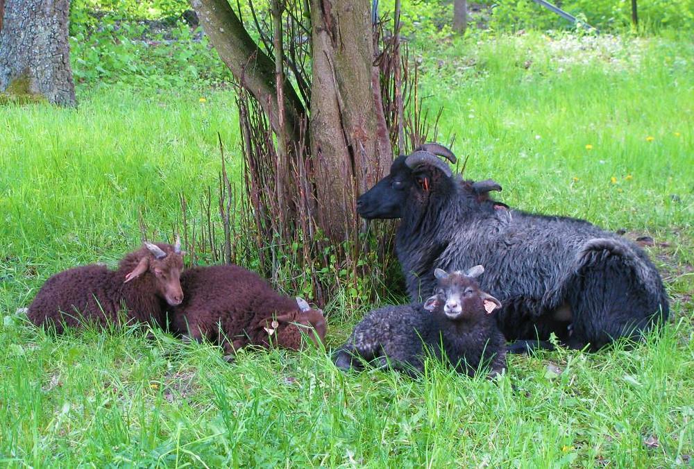 En el Museo Folklórico viven algunos animales típicos de Noruega