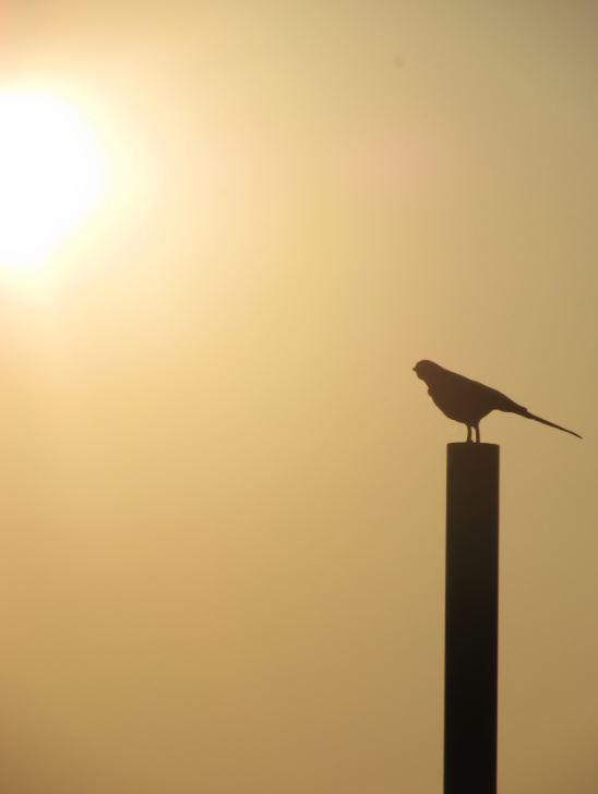 Nos despedimos de Liverpool con una preciosa puesta de sol