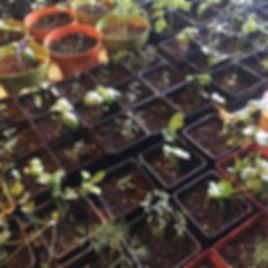 herb seedlings.jpg