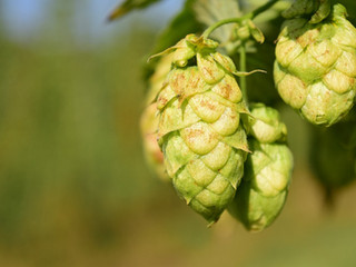 Single Hops and Smaller Quantities Please