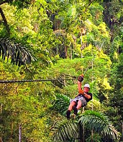 Zipline across the canopy